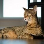 Кошки: кто на свете всех милее?