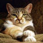 Кошка… напрокат?
