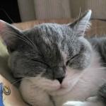 Если бы в мире не осталось кошек… – исследование американских ветеринаров