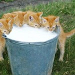 Репродукция мелких животных: ветеринарные и правовые аспекты