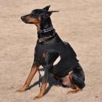 Холтер для суточного мониторинга собак