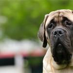 Случай применения эндоскопического обследования при лечении язвы желудка у собаки