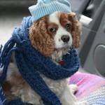 Как помочь собаке пережить холода