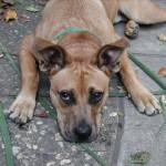 Заворот желудка у собак: причины, симптомы