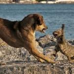 Кошка или собака? Зависит от того, какие эмоции вам нужны!