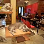 Cats cafe ждет любителей кошек