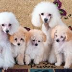 Репродукция собак – основные проблемы
