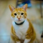 Почему мы любим кошек?