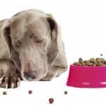 Почему собака отказывается есть?
