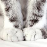 Почему кошка топчет вас лапками?
