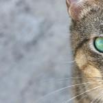 Психология кошек. Позы, мимика, жесты.