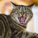 Внезапное проявление агрессии у кошки. В чем причина и как с этим бороться?
