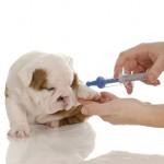 Вакцинация щенков — что, когда и для чего?