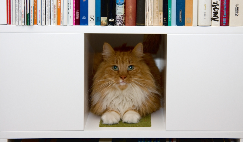 Cat_Furniture_Kattenmeubels_Kattenmeubelen_UrbanCatDesign_Gallery_2_Home_F1