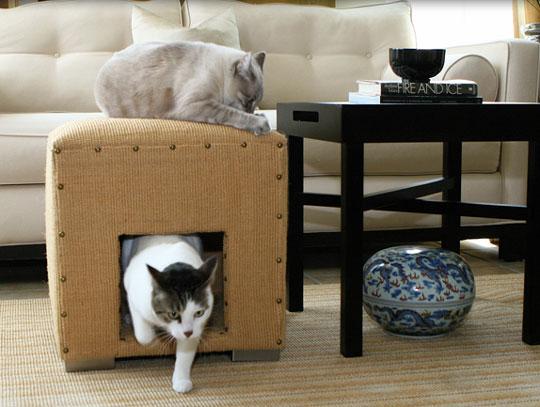 cats-room3 (1)