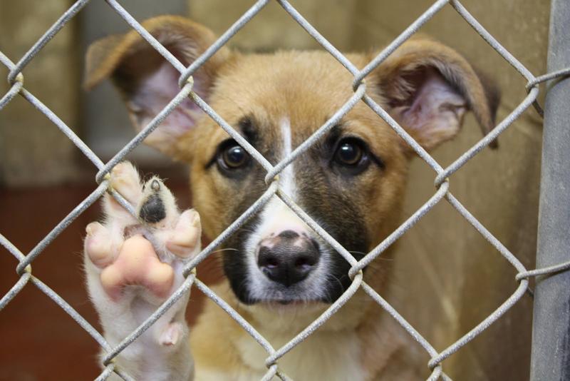 Картинки по запросу собаки в приюте