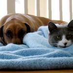 Нарушение обмена веществ у собак и кошек