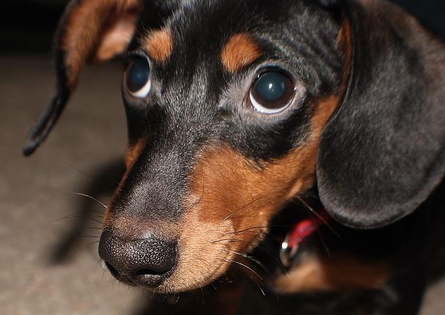 аллергия у собаки глаза