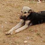 Хромота у собак: симптомы, диагностика