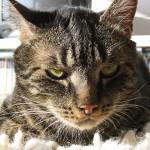 Психология и собенности поведения кошек