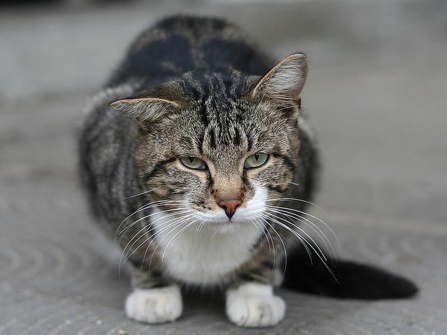 Что поможет коту от запора в домашних условиях 552