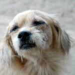 Симптомы отравления у собак. Первая помощь при интоксикации