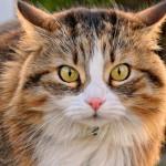 Мочекаменная болезнь у котов: причины, симптомы, лечение