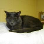 Панлейкопения у кошек: симптомы, профилактика