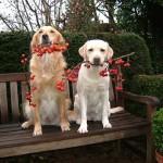 Физический тренинг собак как средство борьбы с наследственными болезнями