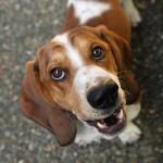 Самые добрые породы собак: какие они?