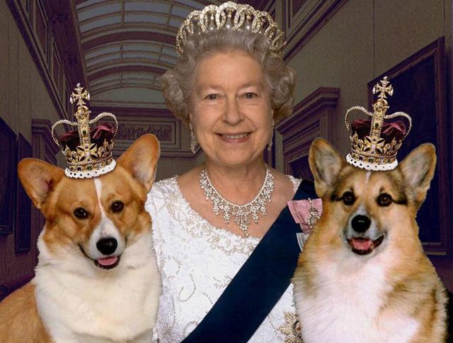 собаки английской королевы