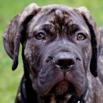 Топ 20 самых опасных пород собак