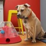 Десятка полезных гаджетов для собак и их владельцев