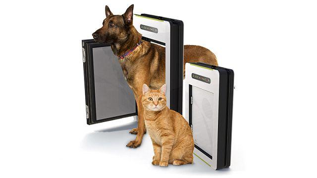 Petwalk – дверь для собак