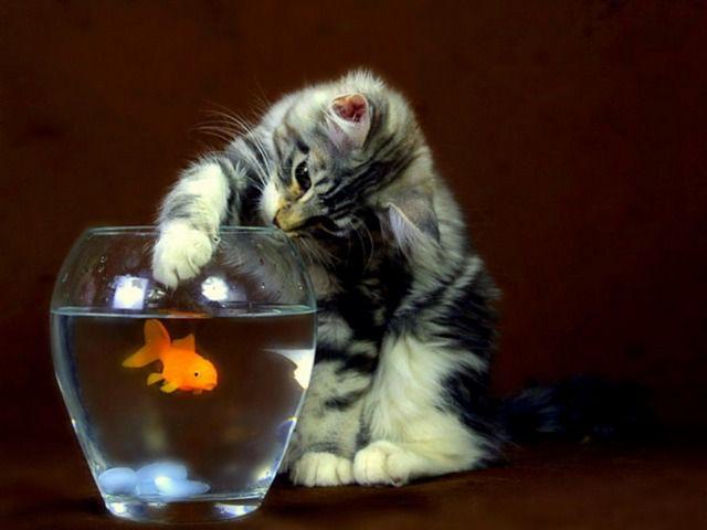 Гаджеты для кошек