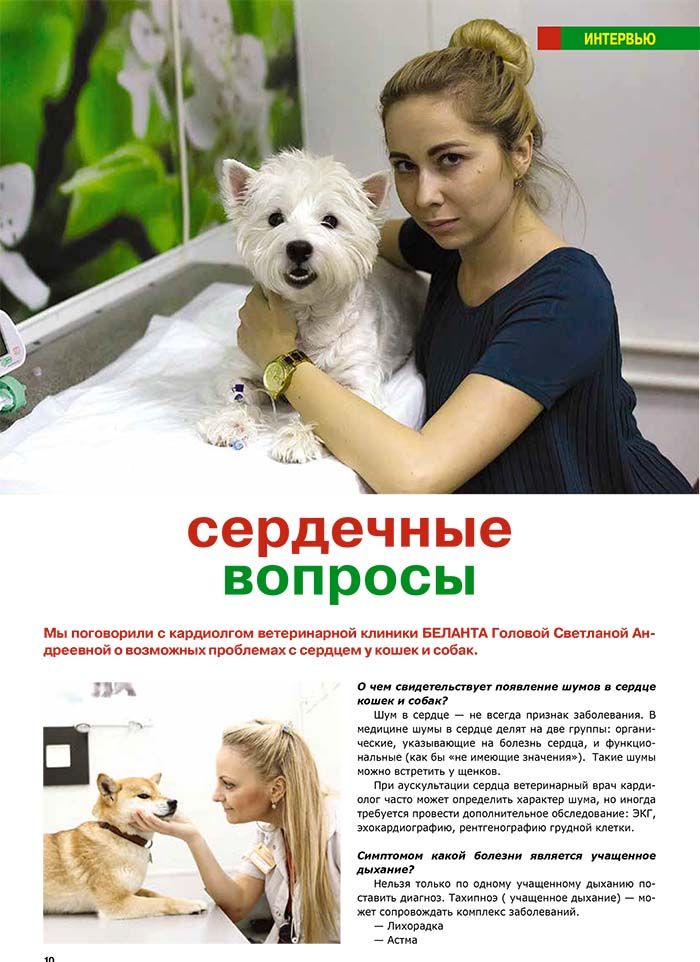 "Интервью кардиологом ветклиники ""Беланта"""