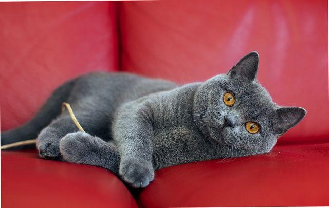 Дорогие породы кошек
