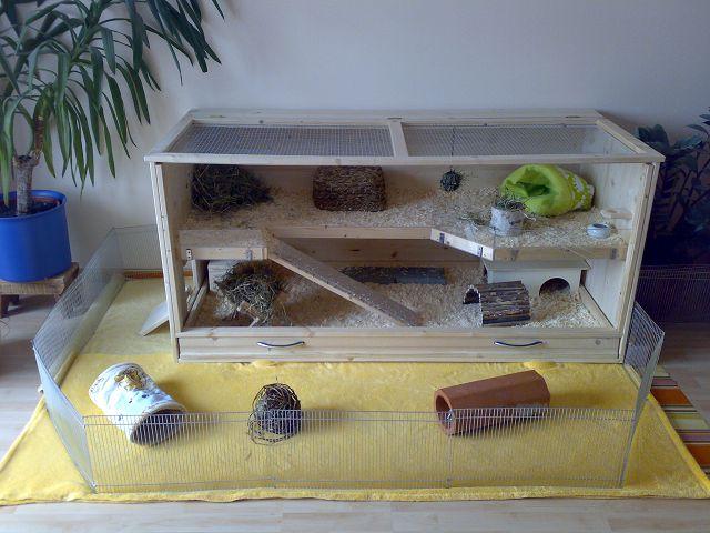 Игрушки для морской свинки фото