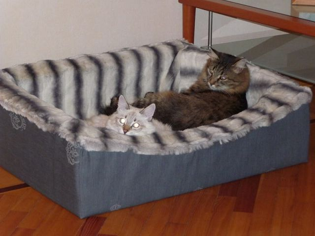 Домики и лежанки для кошки своими руками