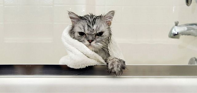 bathing a kitten