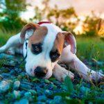 Почему щенок ест землю и камни?