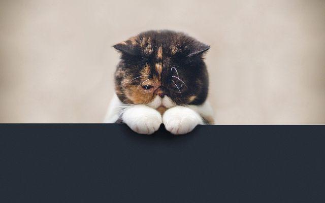 Виноватый котенок