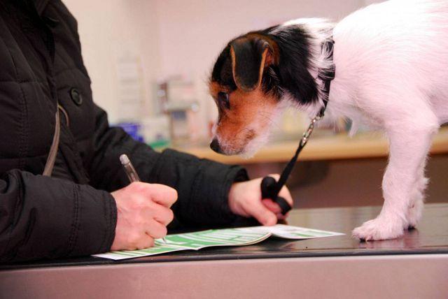Страхование собак