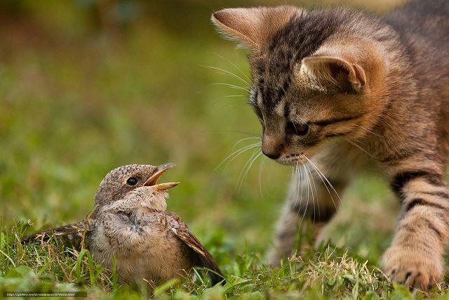 Кошки охотятся