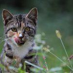 Кошки – очередная опасность для экологии?