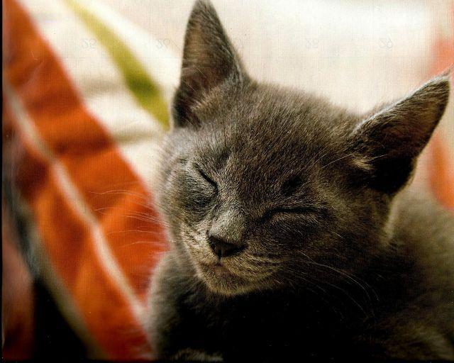 Мурчание кошки