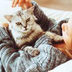 В Волгограде доказали лечебные свойства кошачьего мурчания