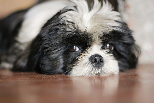 Собака отдыхает на полу