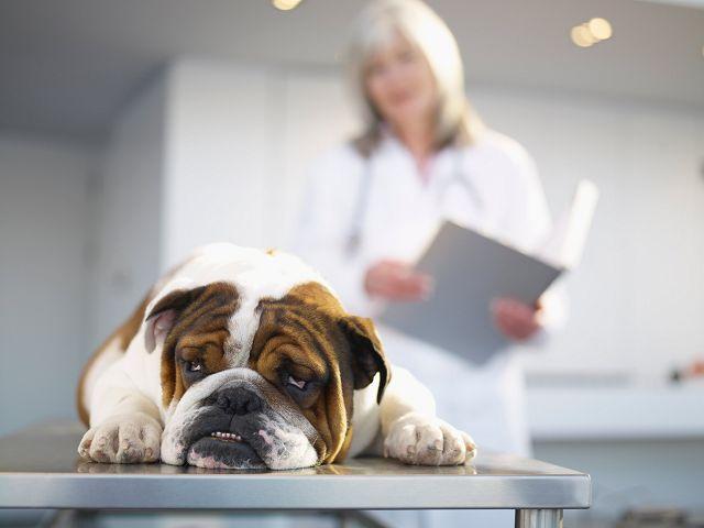 острый панкреатит у собак симптомы