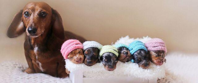 Роды у собаки дома